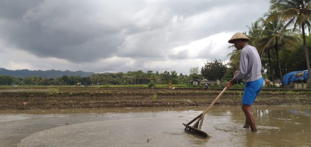 Seorang petani di Ponjong sedang menggarap lahannya. Foto: Keling