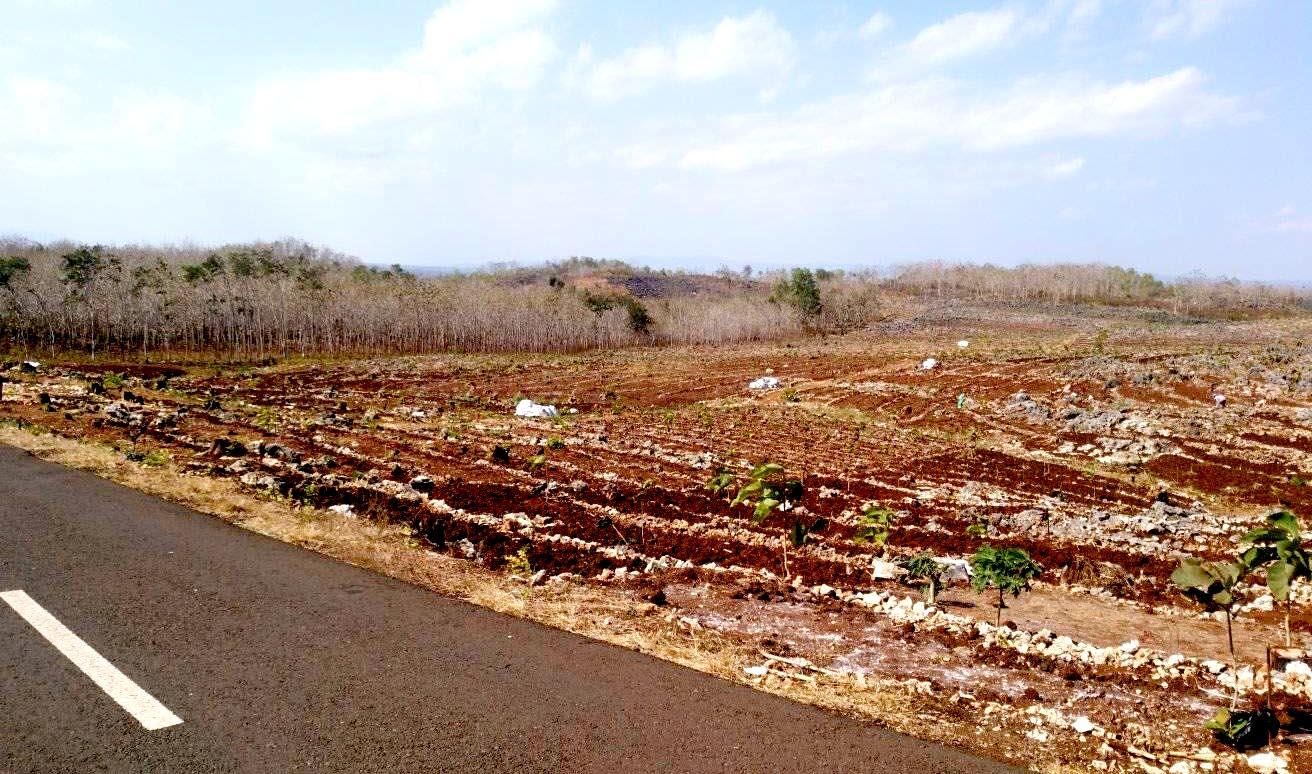 Lahan Pertanian di Gunungkidul. Foto: Padmo