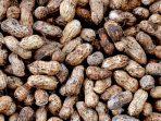 Panenan Kacang
