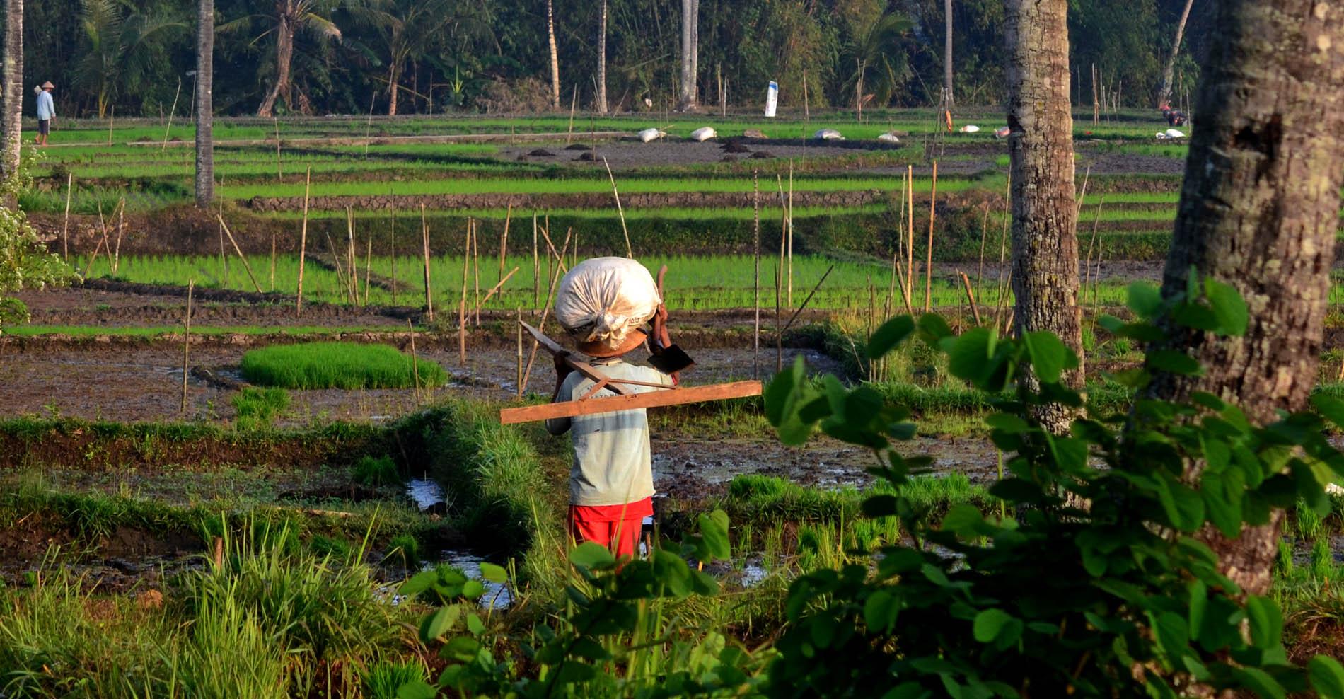 Seorang petani di Karangmojo sedang berjalan menuju sawahnya.[Foto:WG]